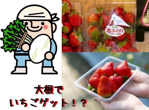 桜島大根の重さを当てて「いちご1kg」ゲット!